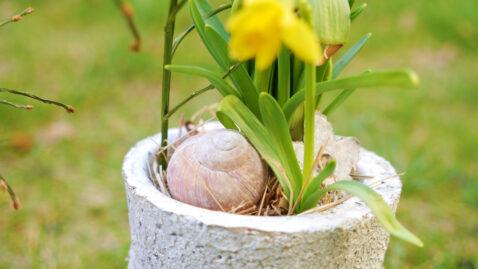 Frühlingsblüher Zwiebel Schale