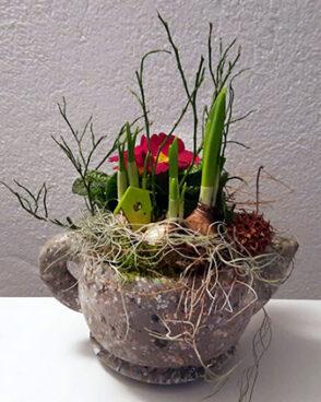 Frühlingsblüher in Steinkanne (auch für den Außenbereich geeignet)